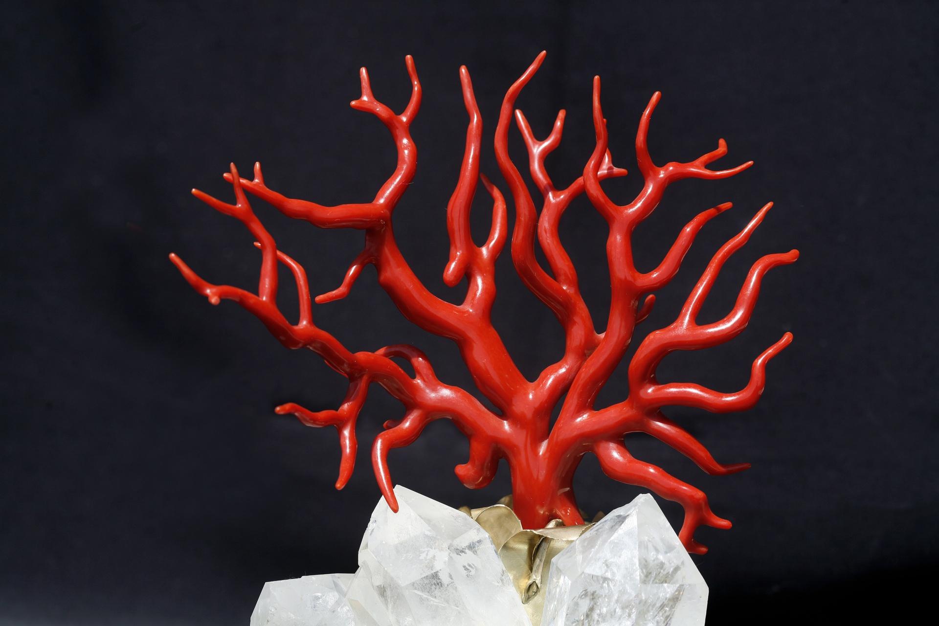 corail-rouge-corse-bonifacio-magasin