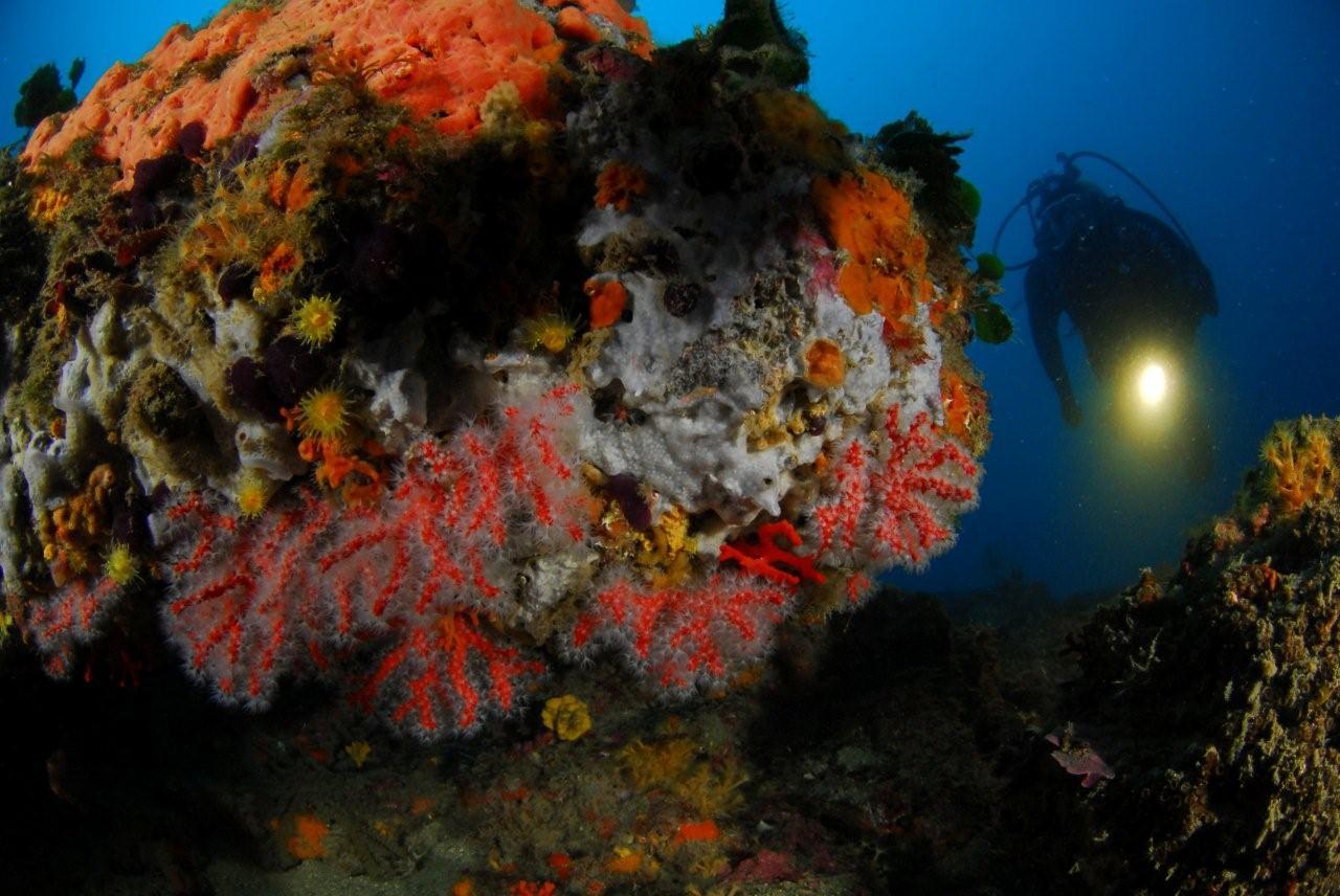 ambiance corail