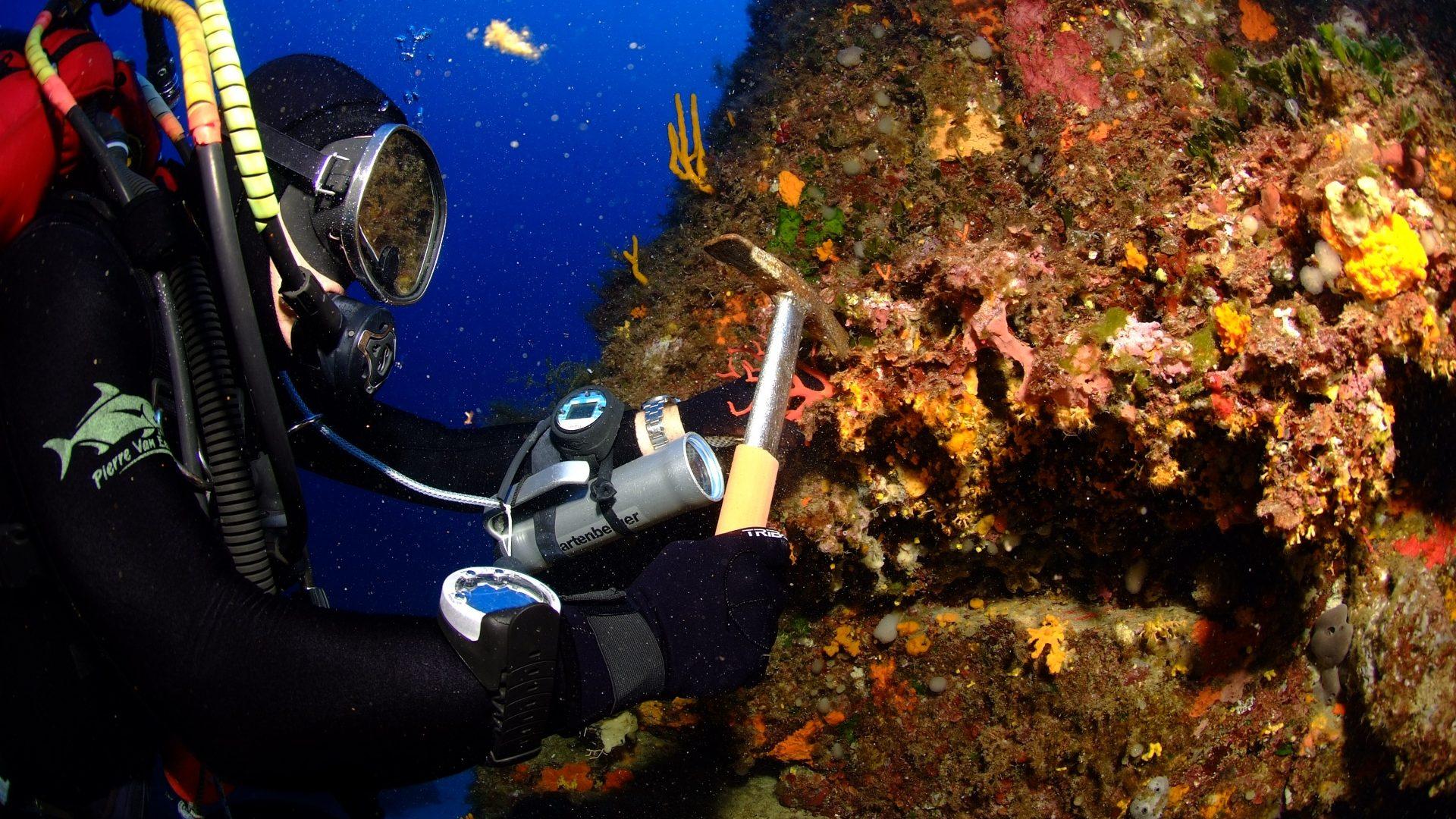 Corail rouge de Bonifacio