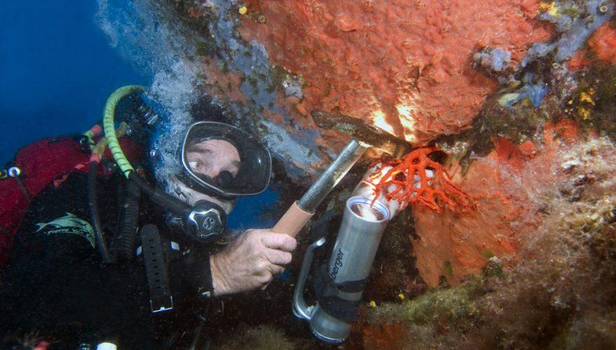 Pêche sélective du corail rouge